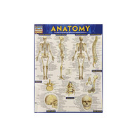 Barchart, Study Guide, Anatomy