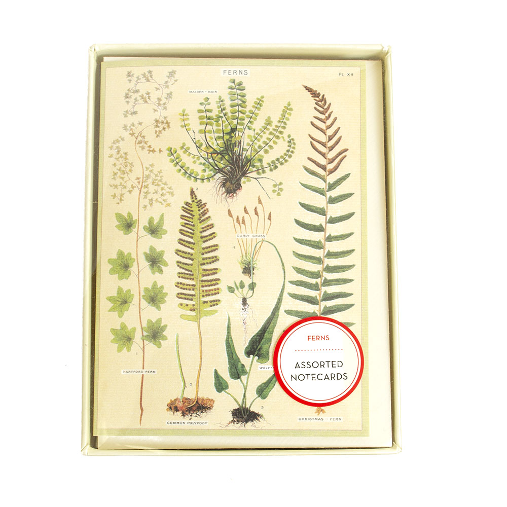 Cavallini, Boxed Notes, Ferns