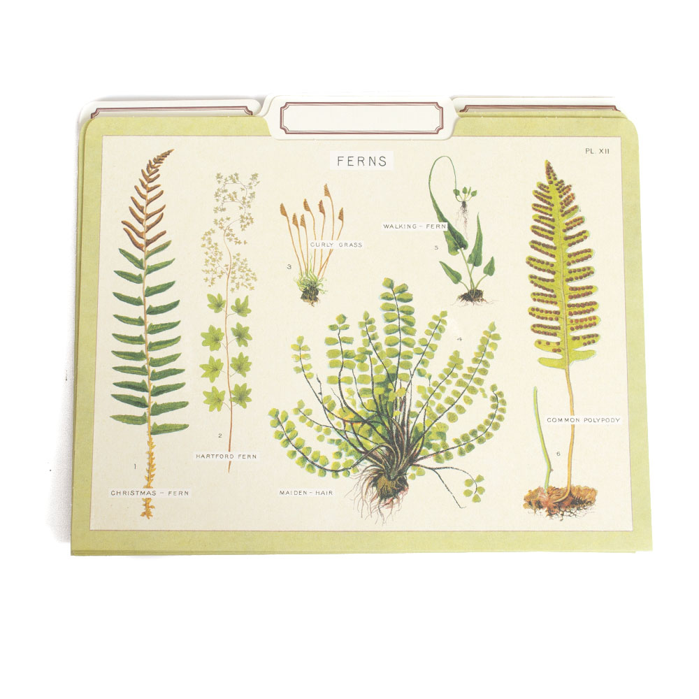 Cavallini, File Folders, 12 Pack, Ferns