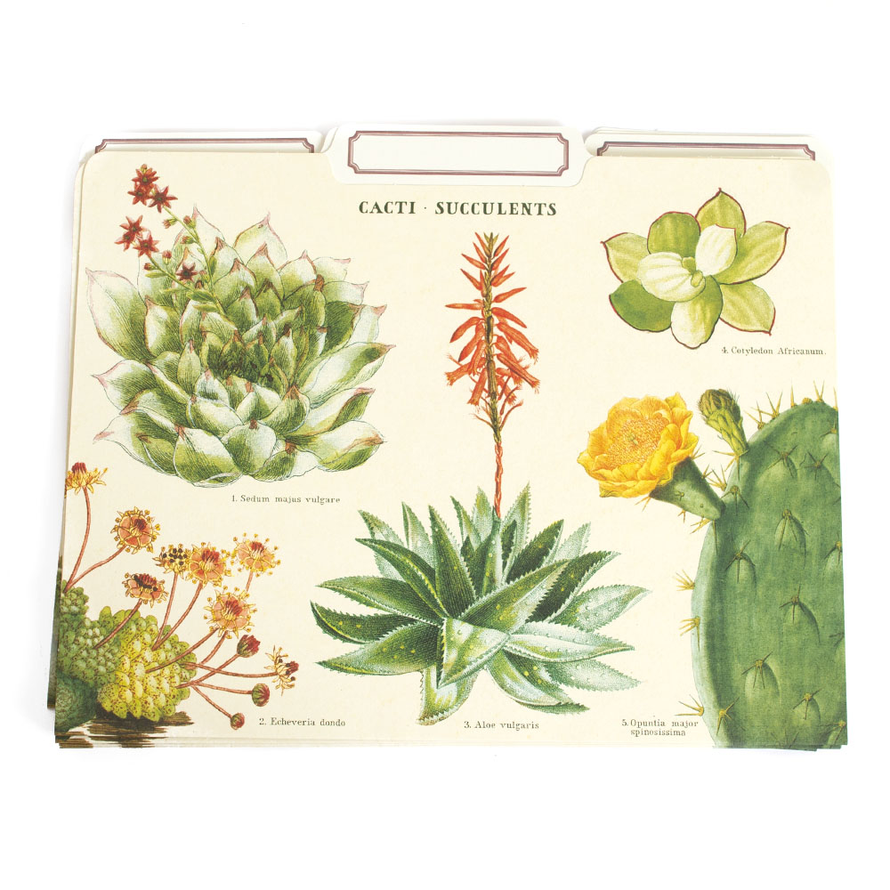 Cavallini, File Folders, 12 Pack, Succulents