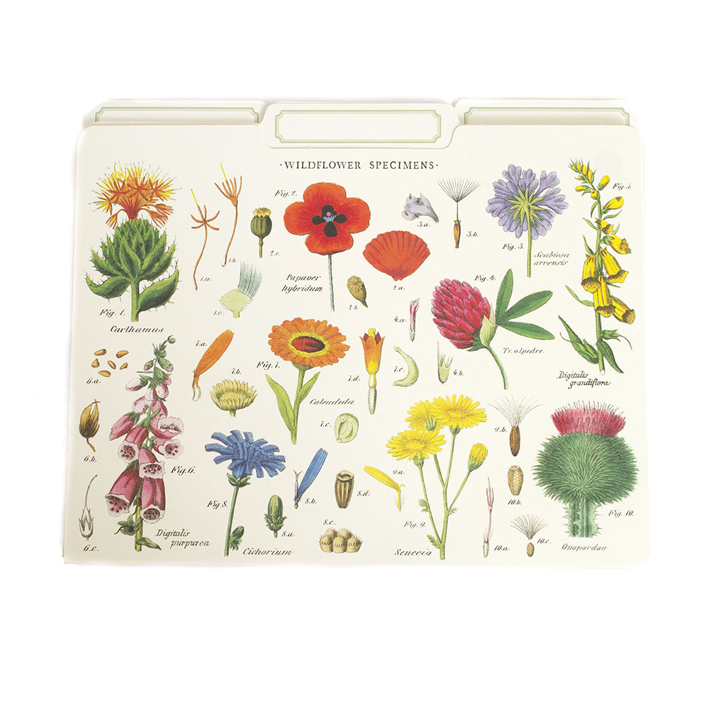 Cavallini, File Folders, 12 Pack, Wildflowers
